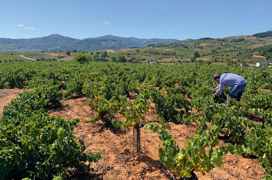 Alvarez-de-Toledo-vineyard-920x609