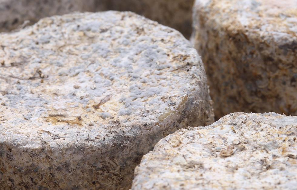 facendera-queso-de-cabra-de-montaña-ladespensa_0002_facendera-quesos-fabrica