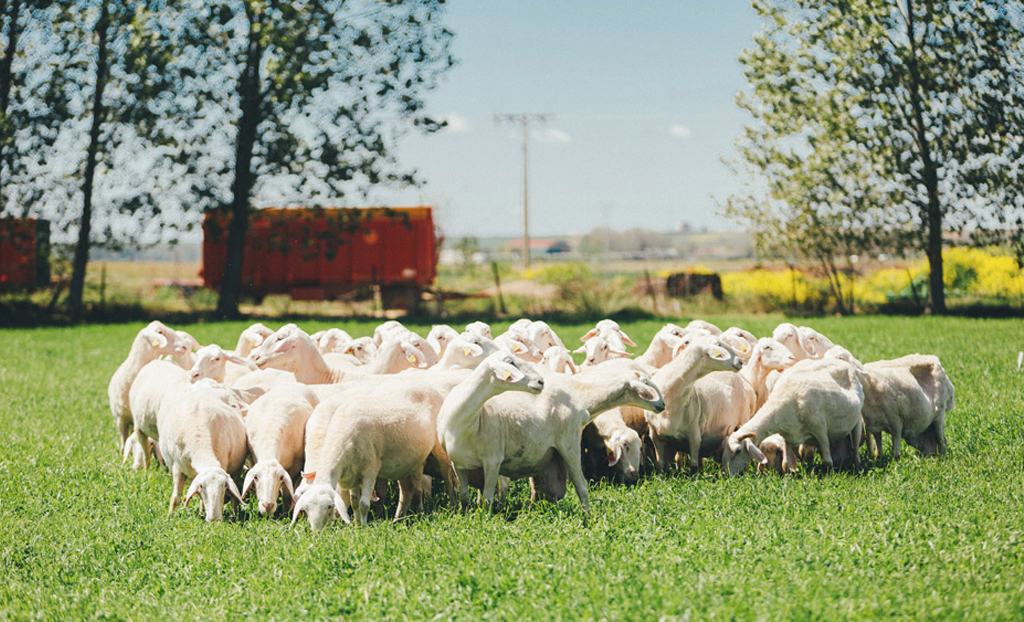 praizal-quesos-oveja-la-despensa-diariodeleon_0000_Capa 6