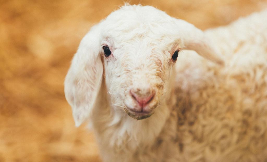 praizal-quesos-oveja-la-despensa-diariodeleon_0003_Capa 2