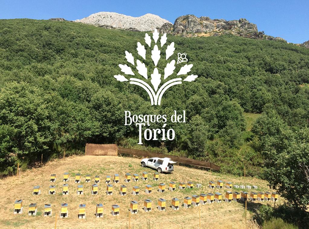 miel-bosques-del-torio-ladespensa-diariodeleon-top_0000_Colmenar3