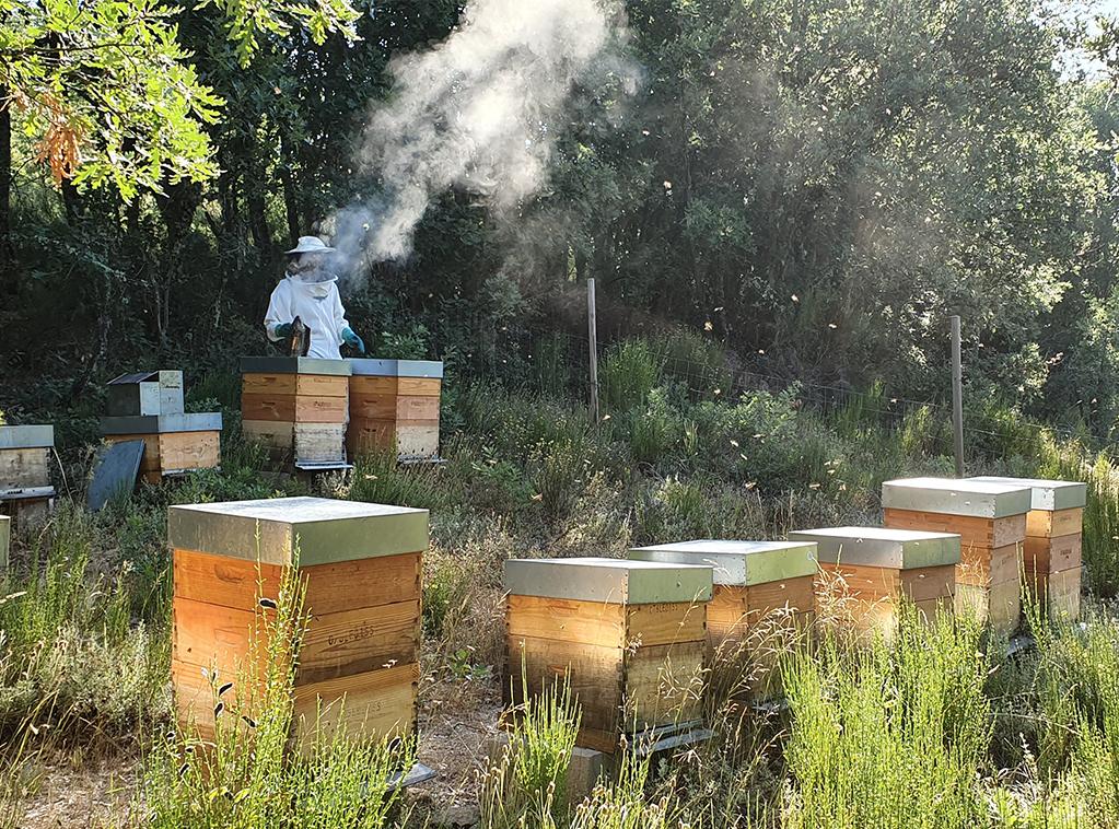 miel-bosques-del-torio-ladespensa-diariodeleon-top_0001_20190712_100211