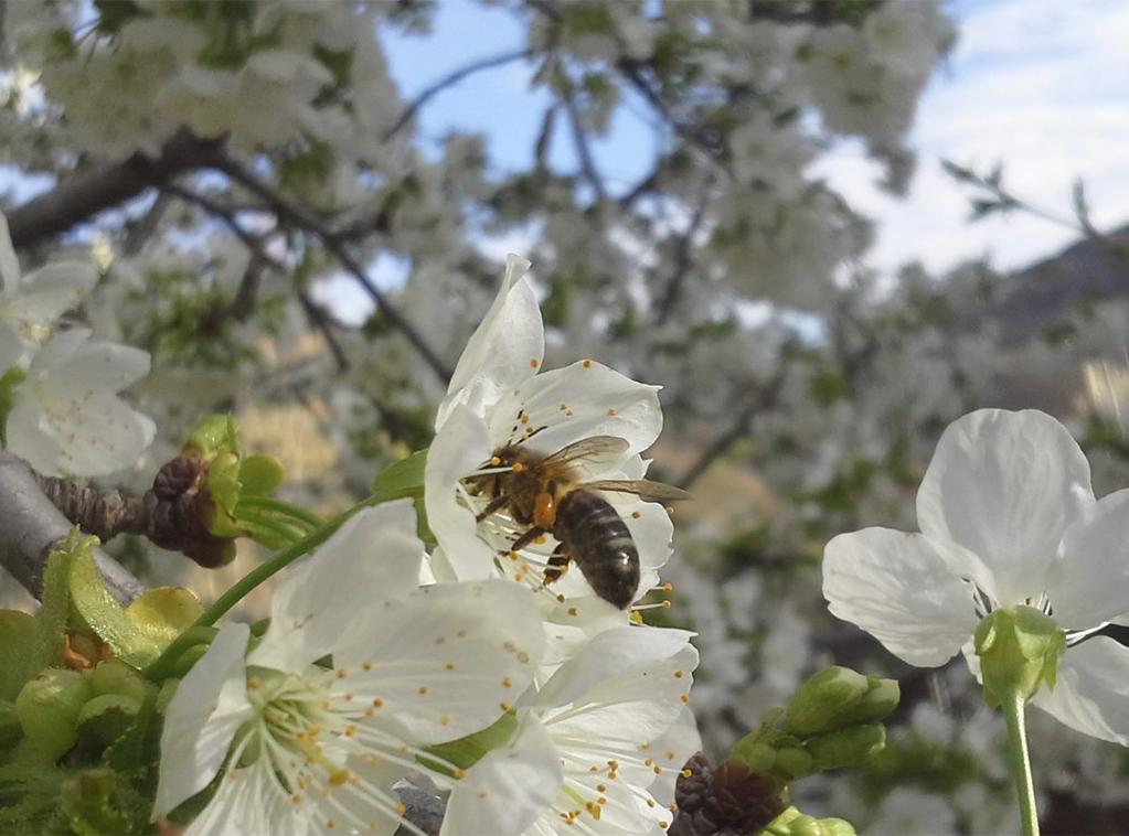 miel-bosques-del-torio-ladespensa-diariodeleon_0001_FotoHome1