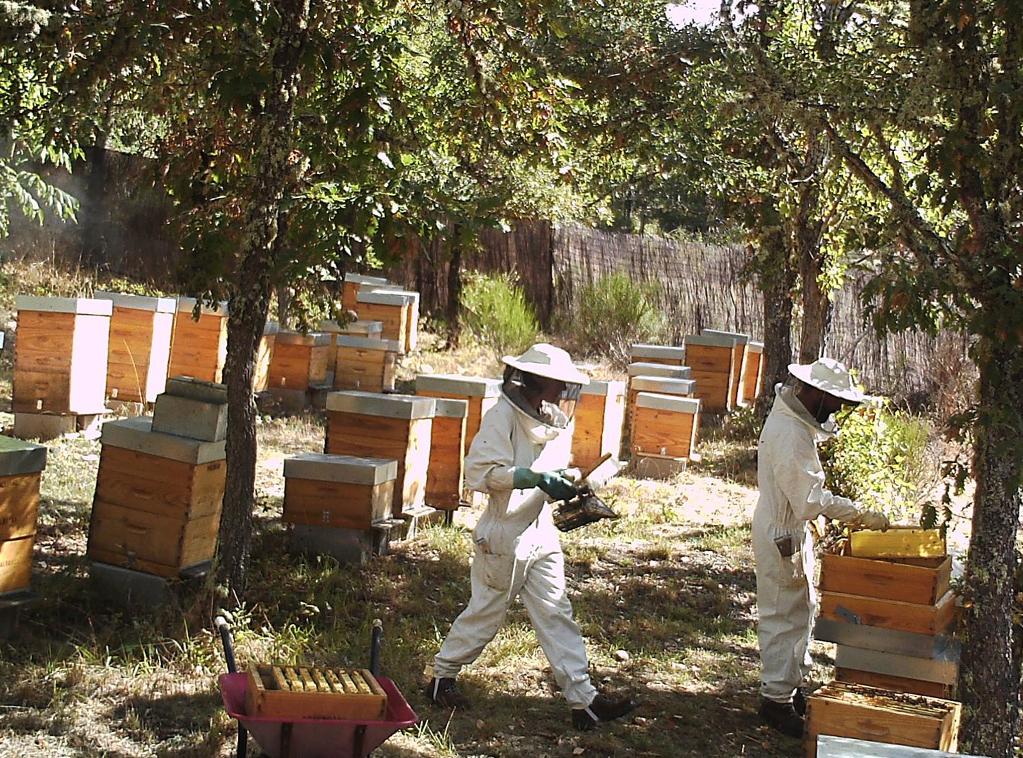 miel-bosques-del-torio-ladespensa-diariodeleon_0002_TrabajosColmenar4