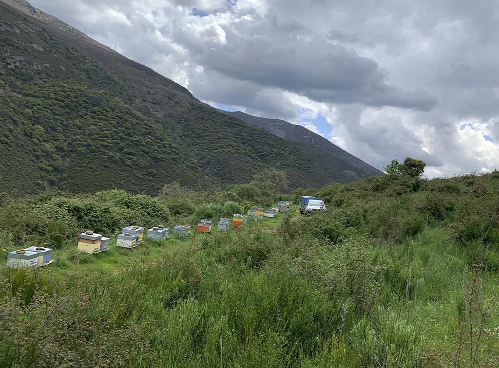 miel-de-leon-ecologica-ladespensa-diariodeleon-paisaje