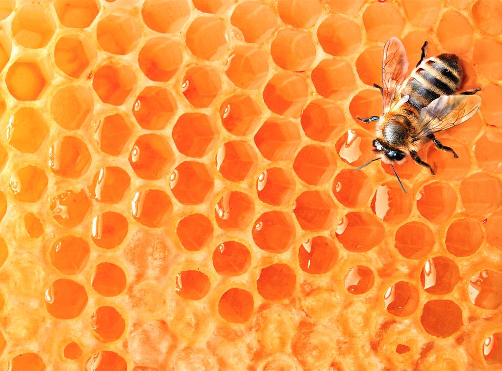 miel-adrian-cuna-del-cea-la-despensa-diariodeleon_0000_panal-1